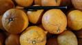 広島県産 キヨミオレンジ        農薬肥料不使用       木成り完熟