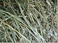 牧草 二番刈りチモシー 500g