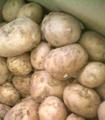 【春の新じゃが】農家直送!「特別栽培」おいしいじゃがいも5kg