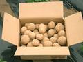 【秋の新じゃが】農家直送!「特別栽培」おいしいじゃがいも10kg