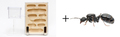 クロナガアリ女王3匹+蟻マシーンセット タネ付き