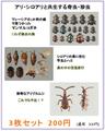 甲虫ポストカード 3枚セット