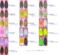 【数量限定】アールグラット リベロ 0.6g ルシフェルカラー(AALGLATT AG Spoon LIBERO LuciferColor)-G811
