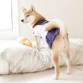 【犬服】憧れのセーラー服♪