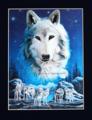 夜の狼 ポートレート