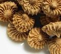 国産 無薬鶏レバージンジャークッキー 30g