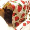 苺とキノコの4重ガーゼ吸湿キルトケット