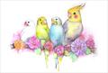 ポストカード「鳥たち」(PIK0014)