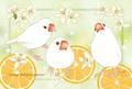 """高級紙ポストカード""""Orange and Javasparrow""""(TTP0048)"""