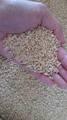 北輝雪【特選】自然栽培米(玄米10kg)