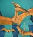 J.P/Pteranodon(B/Loose)