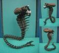 Aliens/Snake Alien(Loose)