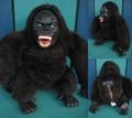 Hairy Gorilla Radio(1977)