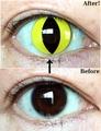 黄色猫目コン【Crazy Lens Cat's Eye】コスプレ専用カラコン2枚セット