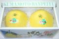 晩白柚 Lサイズ(2個入り)