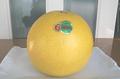 晩白柚 3Lサイズ(1個入り)限定25箱