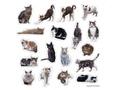 cat シール 2(かざままゆみ)