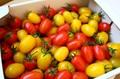 ミニトマト詰め合わせ 2kg詰め