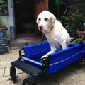 Air Buggy for Dog Carriage