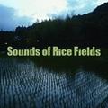 takuya「Sounds of Rice Fields」