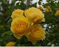 Yellow Petal~実践講座~