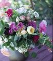 野外レッスンinひかりフラワー ~摘みたてバラと草花の投げ入れ~