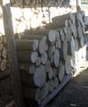 カシの玉切り丸太(平成28年12月伐採)