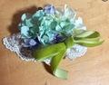 紫陽花コーム