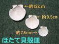 ほたて貝殻皿-12cm