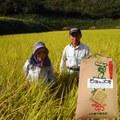 玄米25kg(ヒノヒカリ)