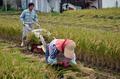 2020年産コシヒカリ玄米5kg 新米販売開始