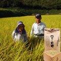 玄米5kg(ヒノヒカリ)