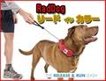 小~大型犬用首輪 RadDog リードインカラー