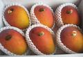 宮古島産完熟アップルマンゴーB級品2kg  (2kg箱入り)×1箱