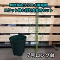 【つる性植物用】7号ロングスリット鉢と行灯支柱のセット(トケイソウ・パッションフルーツ苗の植え付けに最適)