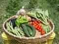「自然農」の無農薬野菜セット(ミニ)送料込み