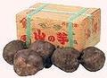 丹波特産 山の芋 特秀2kg