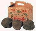 丹波特産 山の芋 優品1kg