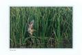 ポストカード「野鳥写真はがき」(6枚組)/Field・Finder