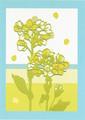 ポストカード「菜の花」/サトウユキエ
