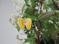 AnimalMedicine<butterfly>小さな太陽