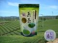 【本格派】深蒸し煎茶ティーパック≪しら菊≫5g×20p