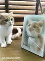 猫ちゃん肖像画
