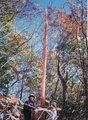 た)立木セット(34002)