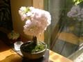 春のブレンド200g豆