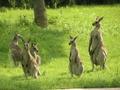 こども動物自然公園   利用補助券