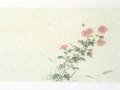 post card(小菊)