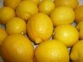 レモン! 【宇和島産】 キロ売り!