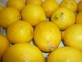 レモン! 【宇和島産】 混合5キロ