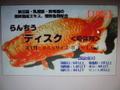 らんちうディスク   増体用・100g   (小分け)